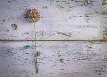 开花在与被风化的涂层, topview, copyspace的桌上 图库摄影