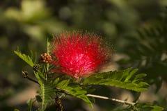 开花在公园的美丽的红色花室外 免版税库存图片