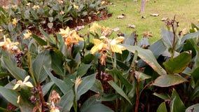 开花在公园的鲜花在春天期间 免版税库存照片
