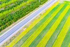 开花在农村的菜子 美好的空中风景 免版税图库摄影