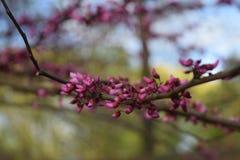 开花在分支的微小的花 库存照片