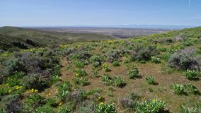 开花在博伊西爱达荷上的山麓小丘的野花鸟瞰图在春天 影视素材