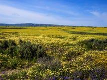 开花在国家公园自然的花田 免版税库存图片