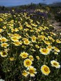 开花在国家公园自然的花田 免版税库存照片