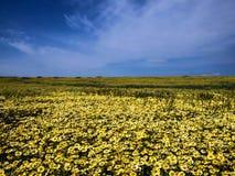 开花在国家公园自然的花田 库存照片