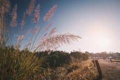 开花在地方走道旁边的草在蓝天 库存照片