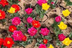 开花在地面上的五颜六色的花 免版税图库摄影