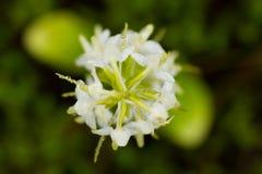 开花在夏天沼泽的一朵美丽的罕见的一点蝴蝶兰花 库存照片