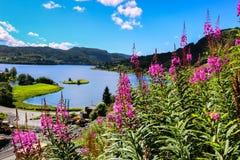 开花在夏天的野草花 免版税库存图片