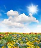 开花在多云蓝天的草甸和绿草领域 免版税库存照片