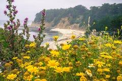 开花在太平洋海岸线的野花 免版税库存图片