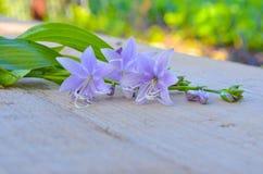 开花在委员会的会开蓝色钟形花的草 库存照片