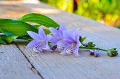 开花在委员会的会开蓝色钟形花的草 库存图片