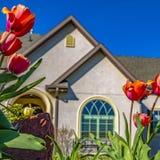 开花在家的庭院的方形的郁金香在清楚的天空蔚蓝下在一好日子 库存图片