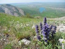 开花在山坡特写镜头的羽扇豆紫罗兰色花 山谷的风景视图与下面湖的 免版税图库摄影