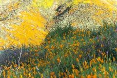 开花在山坡的鸦片 库存照片