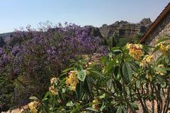 开花在峡谷的花在伊萨卢国家公园,马达加斯加 库存图片