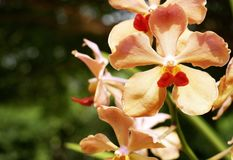 开花在庭院里的橙色兰花 免版税库存照片