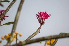开花在庭院里的红色花 免版税图库摄影