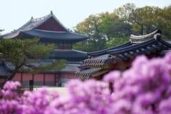 开花在昌德宫宫殿的杜鹃花在汉城,韩国 免版税库存照片