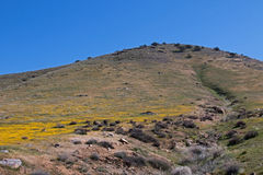 开花在春天在山坡的野花在内华达山的南部的范围的遭受干旱的湖伊莎贝拉旁边 库存照片