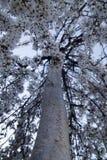 开花在春天的一棵啜泣的樱桃树的垂直的图片 库存照片