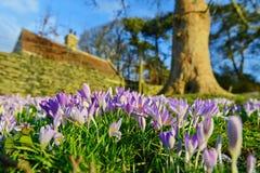 开花在春天的庭院花 免版税库存照片