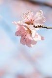开花在春天的美丽的花 库存图片