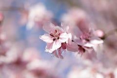 开花在春天的美丽的花 库存照片