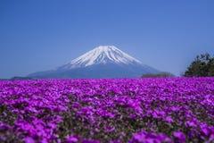 开花在春天的观点的富士山和福禄考 免版税库存照片