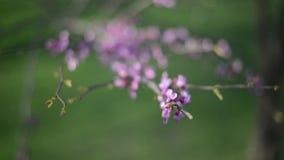 开花在春天 影视素材