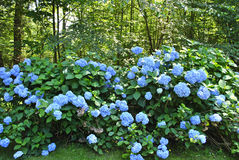 开花在春天 库存图片