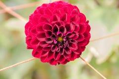 开花在春日的美丽的花 库存图片