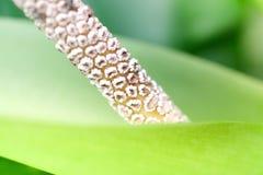 开花在有拷贝空间的绿色庭院里的花的美丽的花粉 它是一个好的自然视图 免版税图库摄影