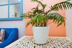 开花在木桌上的一个罐在办公室,诊所度假区  舒适内部概念 选择聚焦,关闭 免版税库存图片