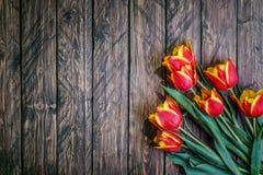 开花在木的郁金香 库存图片
