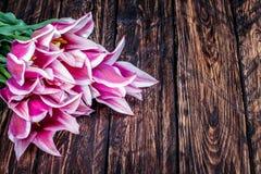 开花在木的郁金香 库存照片