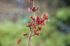 开花在植物世界的绽放的特写镜头  库存照片