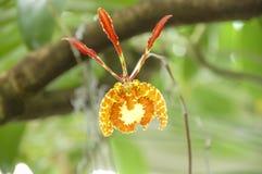 开花在植物世界的绽放的特写镜头  图库摄影