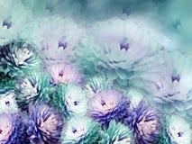 开花在模糊的背景的菊花 绿松石蓝色紫罗兰色背景 花卉拼贴画 背景构成旋花植物空白花的郁金香 皇族释放例证