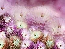 开花在模糊的背景的菊花 红紫罗兰色桃红色背景 花卉拼贴画 背景构成旋花植物空白花的郁金香 向量例证