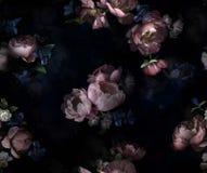 开花在深刻的黑纹理的牡丹 免版税库存图片