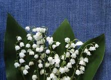 开花在牛仔裤背景的铃兰 安置文本 对设计 在视图之上 背景细部图花卉向量 免版税库存照片