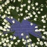 开花在牛仔裤背景的铃兰 背景细部图花卉向量 背景构成旋花植物空白花的郁金香 库存图片
