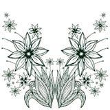 开花在白色背景的buqet 手拉的传染媒介例证 库存图片