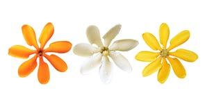 开花在白色背景隔绝的所有颜色 库存图片