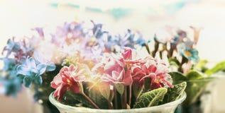 开花在窗口的罐的春天花 免版税库存图片