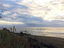 开花在考艾岛海岛上的Waimea的剑叶兰厂在夏威夷 图库摄影