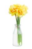 水仙开花在花瓶的诗句 免版税库存照片