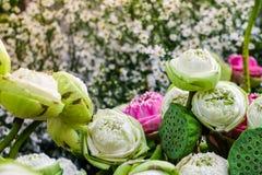 开花在花背景的庭院里的五颜六色的莲花 库存照片